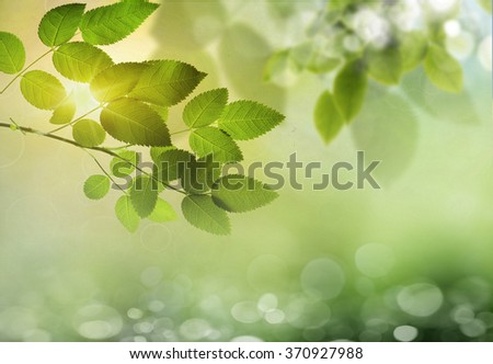 Spring or summer season abstract nature background with grass and blue sky in the back  - stock photo