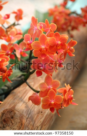 Spring Orchid - stock photo
