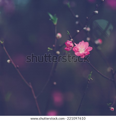 spring pink cherry blooming with retro pastel tones and canvas painting effect - stock photo