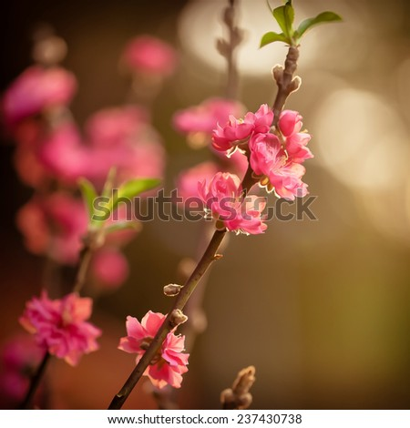 spring pink cherry blooming with retro vintage tones and oil paint effect - stock photo