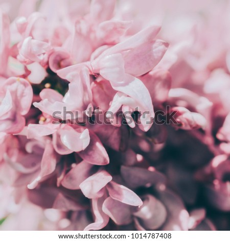Spring pink lilac flowers, background photo