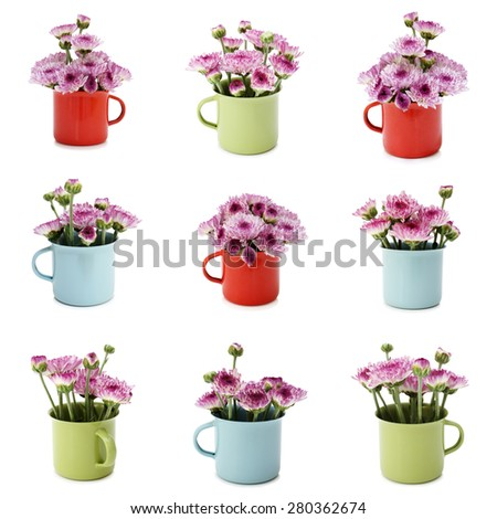 Spring purple flower in small various colors cups cute with isolated on white background - stock photo