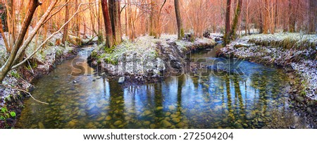 Spring rare flowers - beautiful snowdrop bloom in March in alpine coniferous and deciduous forests on the background of wild creeks swamps lakes Carpathian Transcarpathian Ukraine after the snow melts