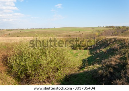 Spring ravine tree. Soil erosion in a spring season. Trees along a sunny ravine in spring - stock photo