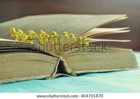Spring retro still life - open worn book with small mimosa branch  under warm light.  Vintage filter processing. Selective focus at the book spine.   - stock photo