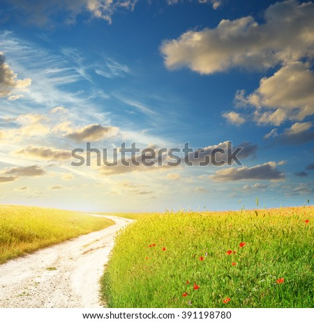 Spring roadlane and meadow of flowers. Nature compsition. - stock photo