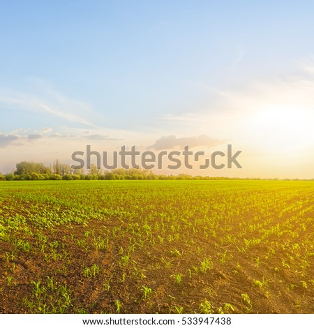 spring rural field at the sunsset