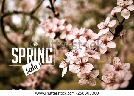 Spring sale cherry blossom Background royalty free stock photo for greeting card, ad, promotion, poster, flier, blog, article, social media, marketing - stock photo