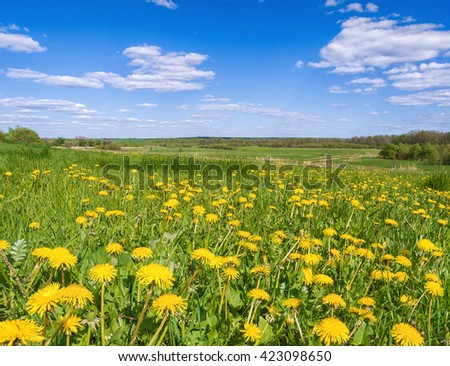 Spring scene with dandelions - stock photo