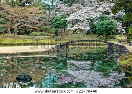 Spring Scenery Of A Sakura Cherry Blossom Tree Blooming By A Stone Bridge  And Reflected In