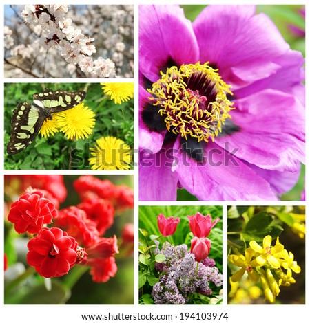Spring season collage - stock photo