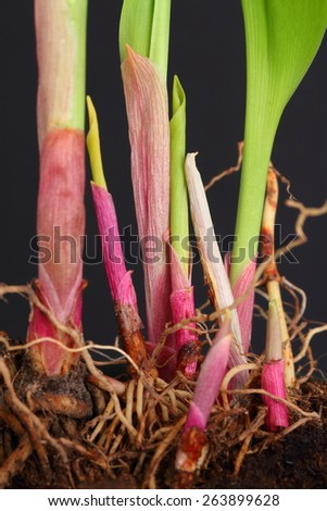 spring shoots - stock photo
