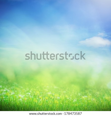 Spring sky with sunny field with flowers and grass