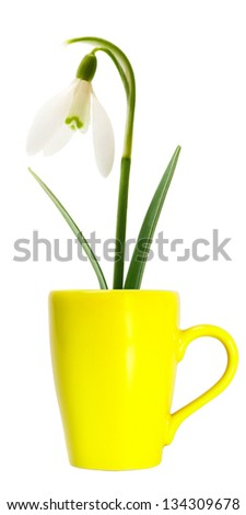 Spring snowdrop flower in yellow mug isolated on white background - stock photo