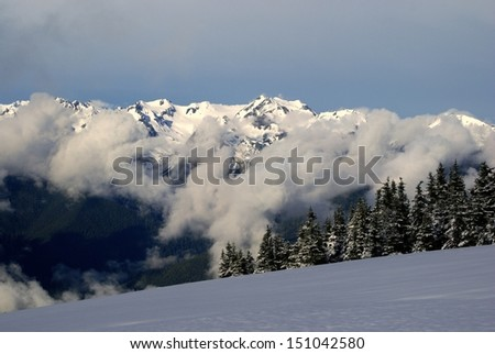 Spring Snows on Hurricane Ridge - Clouds Shroud the Olympic Range - Olympic National Park in Washington - stock photo