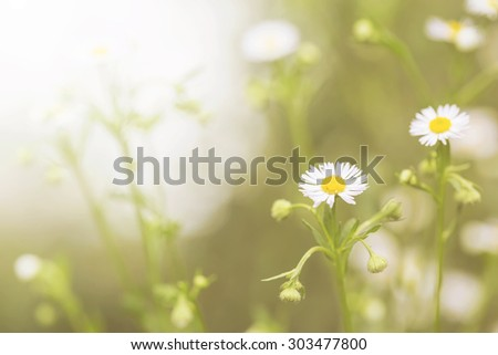 Spring soft focus little white daisy flower and grass for nature agriculture abstract vintage background - stock photo