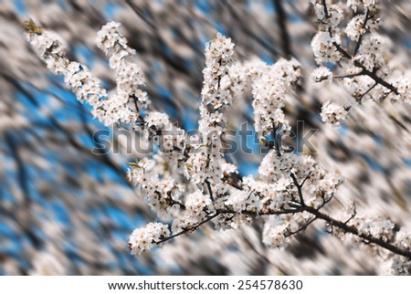 Spring. Soft image of blossoming tree brunch with white flowers. Shallow DOF - stock photo