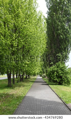 Spring . Street with pavement and trees - stock photo
