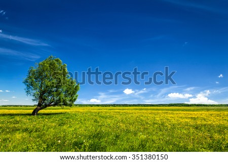 Spring summer background - blooming flowers green grass field meadow scenery lanscape under blue sky with single lonely tree