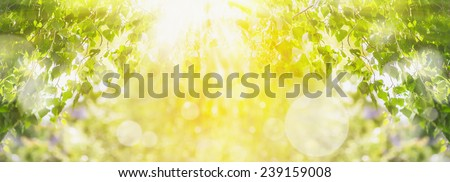 Spring summer background with green tree,sunlight and sun rays, panorama - stock photo
