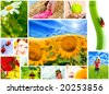 Spring, summer, spa, multi image - stock photo