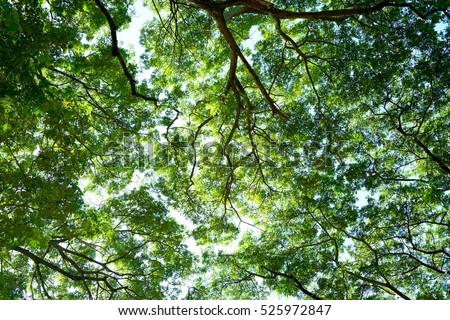 Spring Sun Shining Through Canopy Of Tall Tree Sunlight In Deciduous Forest Summer Nature