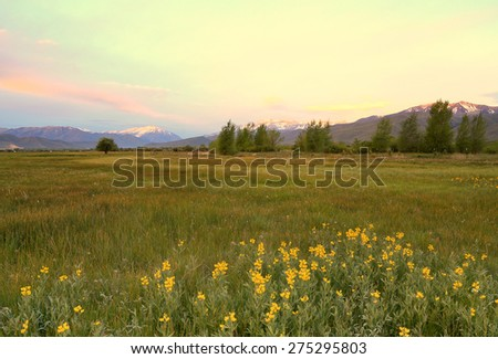 Spring sunrise field in rural Utah, USA.
