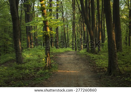 Spring sunset in the forest - stock photo
