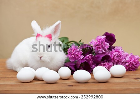 Spring symbols - white bunny waiting for easter with seasonal flowers- shallow depth of field - stock photo