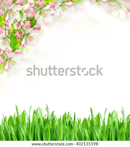 Spring time. Apple tree blossoming and green grass on white background - stock photo