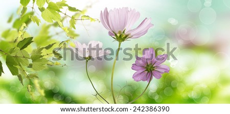Spring Time background.Nature - stock photo