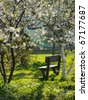 Spring time. Blooming apple trees in park - stock photo