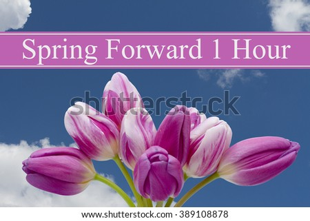 Spring Time Change, Some tulips with blue background and text Spring Forward 1 Hour - stock photo
