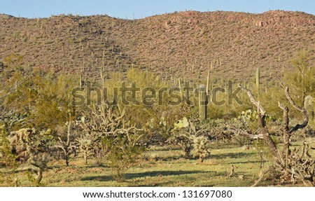 Spring time in the Sonoran desert - stock photo