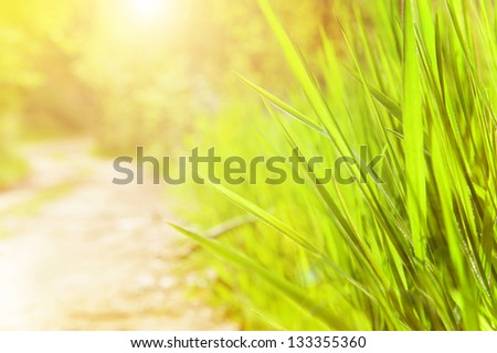 Spring time sunny day, fresh green grass, soft focus, warm yellow sun light on the meadow, good weather - stock photo