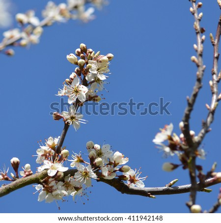 Spring Tree Blossom Against Sky - stock photo