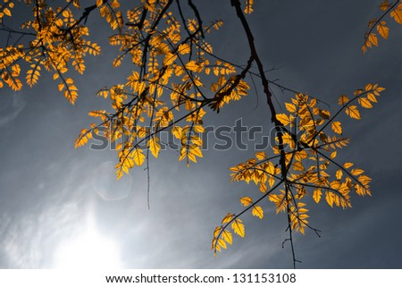 Spring tree branches against the sky. Spring landscape. Dramatic light. - stock photo