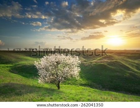 Spring tree in mountain meadow. Nature composition. - stock photo