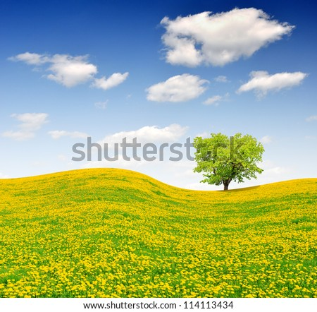 Spring tree on dandelions field - stock photo