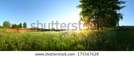 Spring tree on the green lush meadow at sunny day - stock photo
