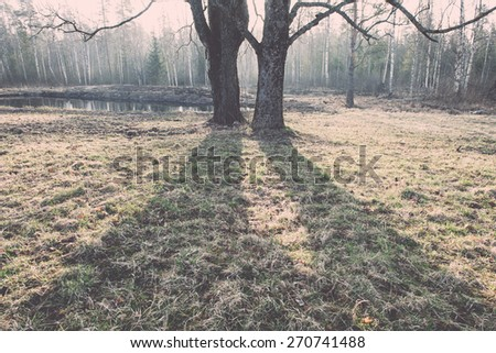 spring tree with shadows and bright sky in background - retro vintage film effect - stock photo