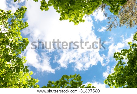 Spring trees and blue sky background. - stock photo