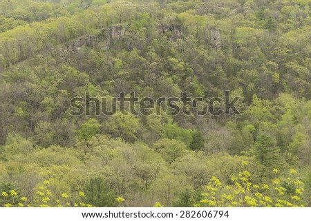 Spring Trees On Hill - stock photo