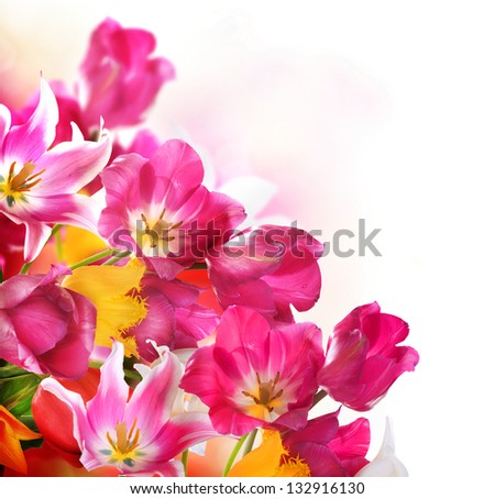 Spring Tulip Flowers over white. Tulips bunch. Floral Border Design isolated on a White Background