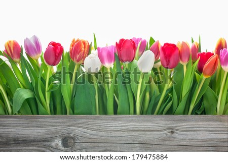 spring tulips flowers with copy space for your message - stock photo