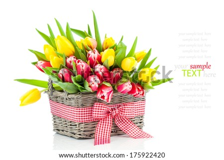 spring tulips in wooden basket, on white background. happy mothers day, romantic still life, fresh flowers - stock photo