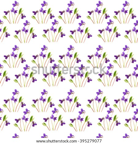 spring violets on stems with leaves pattern  on a white background