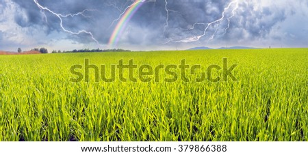 Spring warm air the sun warms the ground  begin to beautiful green field with a future crop of grain in Ukraine's breadbasket bright beautiful young sprouts color emerald shines in the light