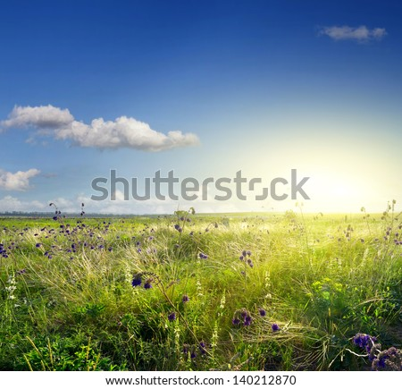 spring, wild flowers at dawn. - stock photo