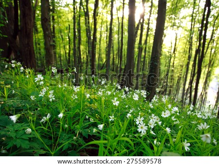 Spring wild flowers in green forest at sunset - stock photo